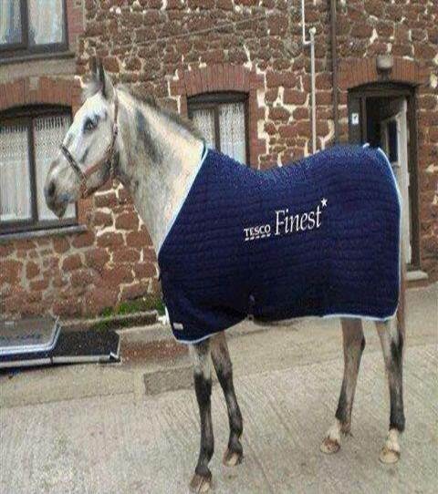 Finest Horse