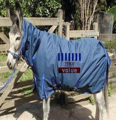 Value Horse